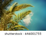 palm trees on the background of ... | Shutterstock . vector #646001755