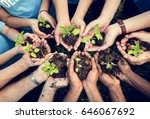 people hands cupping plant... | Shutterstock . vector #646067692