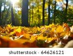 Macro Photo Of A Fallen Leaves...