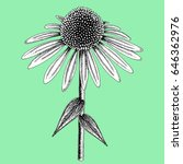 Coneflower Colored In Black An...