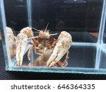 shrimp crayfish in the cabinet. ... | Shutterstock . vector #646364335