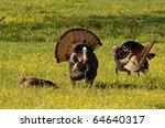 Photograph Of Wild Turkeys...