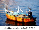 White And Black Herons On The...