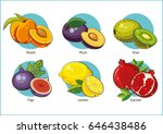 fruit. vector illustration. | Shutterstock .eps vector #646438486