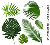 different tropical leaves on... | Shutterstock . vector #646536286