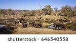 african bush elephant in kruger ... | Shutterstock . vector #646540558