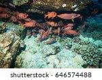 reef fish | Shutterstock . vector #646574488