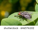insect fly sitting on green... | Shutterstock . vector #646576102
