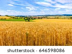 agriculture wheat field... | Shutterstock . vector #646598086
