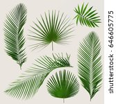 different tropical leaves on... | Shutterstock . vector #646605775