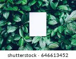 paper card mockup on a green... | Shutterstock . vector #646613452