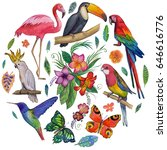tropical garden birds ...   Shutterstock . vector #646616776