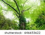 look up at the trees in the... | Shutterstock . vector #646653622