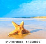 Shell Sea Star