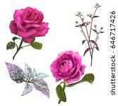 Stock photo illustration of beautiful flower on white background 646717426