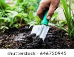 A Woman's Hand Digs Soil And...