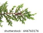 Juniperus Horizontalis Leaves...