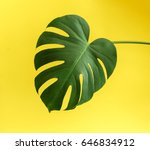 monstera leaf | Shutterstock . vector #646834912