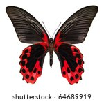 Stock photo butterfly isolated in white clipping path included 64689919