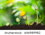 new young plant growing in the... | Shutterstock . vector #646989982