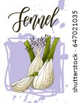 vegetable food banner. fennel... | Shutterstock .eps vector #647021035
