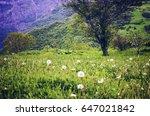 field of dandelions with...   Shutterstock . vector #647021842