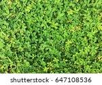 Green Bush Leaves Floor...