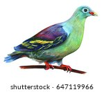 Green Dove Realistic Drawing