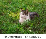 Cat On The Grass