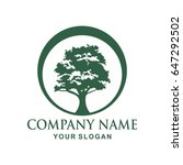 tree logo design | Shutterstock .eps vector #647292502