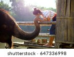 Life Style Of Elephant And...