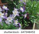 flower bed garden | Shutterstock . vector #647348452
