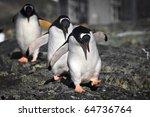 Three Penguins Running Over Th...