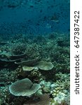 Small photo of Reef scenic with acropora hard corals Sulawesi Indonesia