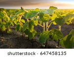 agricultural soy plantation on ... | Shutterstock . vector #647458135