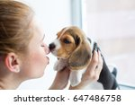 Stock photo beagle puppy kissing a girl 647486758