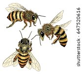 hand drawn bees sketch set in... | Shutterstock .eps vector #647520616
