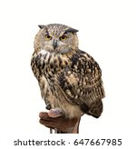 Stock photo owl isolated on white background 647667985