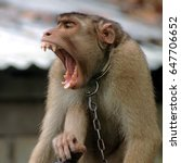monkey open mouth intimidating... | Shutterstock . vector #647706652