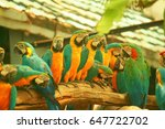 parrot sitting in a line on a... | Shutterstock . vector #647722702