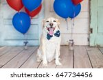 Stock photo patriotic dog in a bowtie and balloons 647734456
