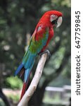 beautiful parrot  | Shutterstock . vector #647759845