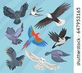 different flying birds breed... | Shutterstock .eps vector #647953165