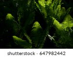 Fern Leaves Background. A Fern...