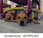 resting dog | Shutterstock . vector #647991292