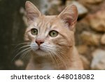 Tiny Hungry Kitten