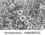 chrysanthemum in the park style ... | Shutterstock . vector #648080932