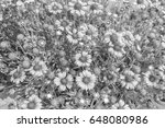 chrysanthemum in the park style ...   Shutterstock . vector #648080986
