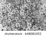 chrysanthemum in the park style ... | Shutterstock . vector #648081052