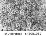 chrysanthemum in the park style ... | Shutterstock . vector #648081052